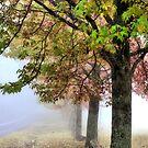 Pastel Colours of Mt Wilson NSW Australia by Bev Woodman