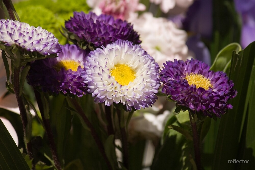 Daisies In Spring by reflector