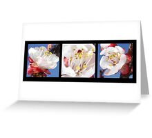 Apricot Blossom Triptych  Greeting Card