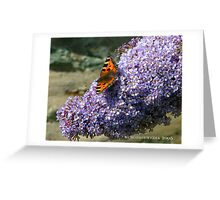 Butterfly 1# Greeting Card