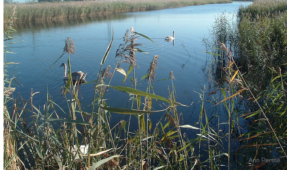 Wet Lands Waters by Ann Persse