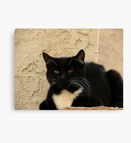 Complex Cat Canvas Print