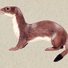stoat by Reet Rea