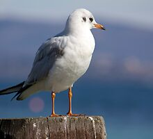 Gull's thought by becks78