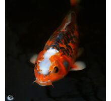 Koi Carp & Bubble Photographic Print
