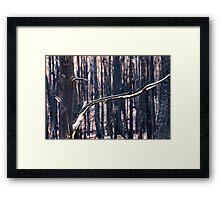 Forest Destruction. Framed Print