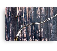 Forest Destruction. Metal Print