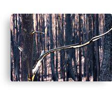 Forest Destruction. Canvas Print