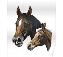 mare and foal painting Poster