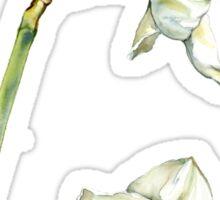 White & Yellow Daffodil Sticker
