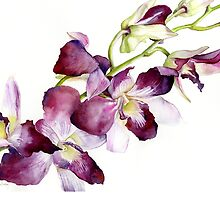 Radiant Orchids: Magenta Dendrobiums by cindyloubailey