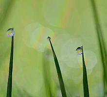 Three Little Balls by relayer51