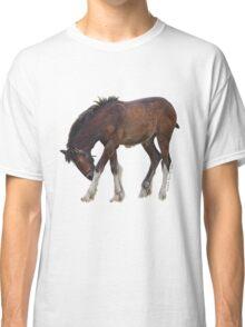 Foal - Cotebrook Shire Horse Centre Classic T-Shirt