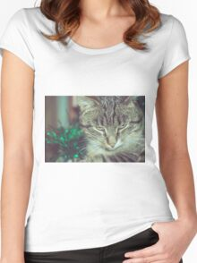 Retro Tabby Cat and Green Tinsel 4 Women's Fitted Scoop T-Shirt