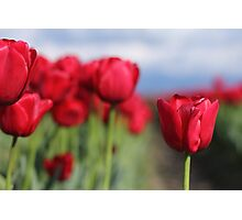 Showy Reds Photographic Print