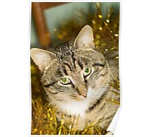Tabby Cat and Yellow Tinsel Poster