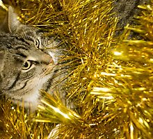 Tabby Cat and Yellow Tinsel 3 by AnnArtshock