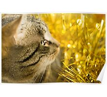 Tabby Cat and Yellow Tinsel 4 Poster