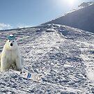 Polar ice cap by Susan Littlefield