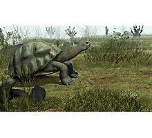 Galapagos Tortoise Photographic Print