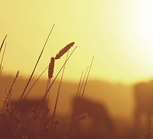 Golden Grass by Simon Greening
