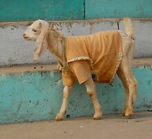 Goat tee by lutibandoma
