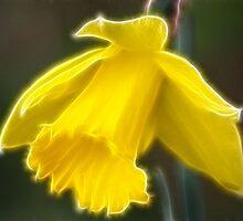 Lone daffodil by Rosemariesw