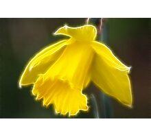 Lone daffodil Photographic Print