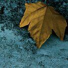 leaf by Susanne Correa