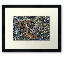 Sirius Malaysian Tiger Framed Print