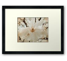 Magnolia Bloom - Nature Photography Framed Print