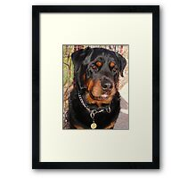 Troy: Father of Nine (Rottweiler) Framed Print