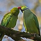 Courting by Robert Abraham