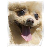 Chihuahua Dog Print / Tshirt - animal print Poster
