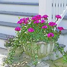 Pink Geraniums by Kenneth Hoffman