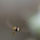 Hoverfly by Cawi
