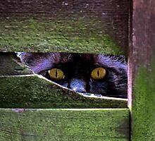 Peeping Tom by Mortimer123