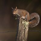 Squirrel in Cades Cove by photodug