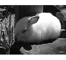 Beautiful dreamer, black and white Photographic Print