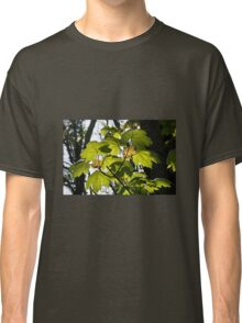 Young Sycamore Leaves Classic T-Shirt