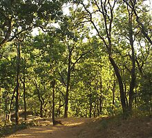 A path through a sparse forest and trees by ashishagarwal74