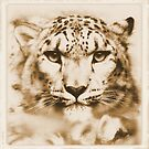 The Snow Leopard - Wildlife Appeal  by Leny .