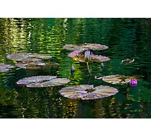 Tranquility Pond Photographic Print