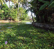 Weeds, plants, boats and lots of greenery on a coastal saltwater lagoon by ashishagarwal74