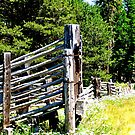 The Old Cattle Gate by the57man