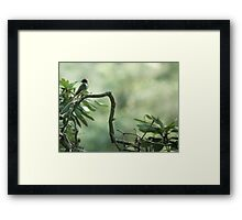 Song Bird Summer Framed Print