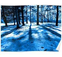 Blue Forest Natural Light and Shadow Poster