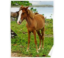 Wild Beach Foal Poster