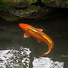 Beautiful Koi ~ Trying to Hide by SummerJade