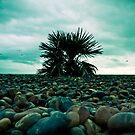 Brighton beach,England by Tony Day